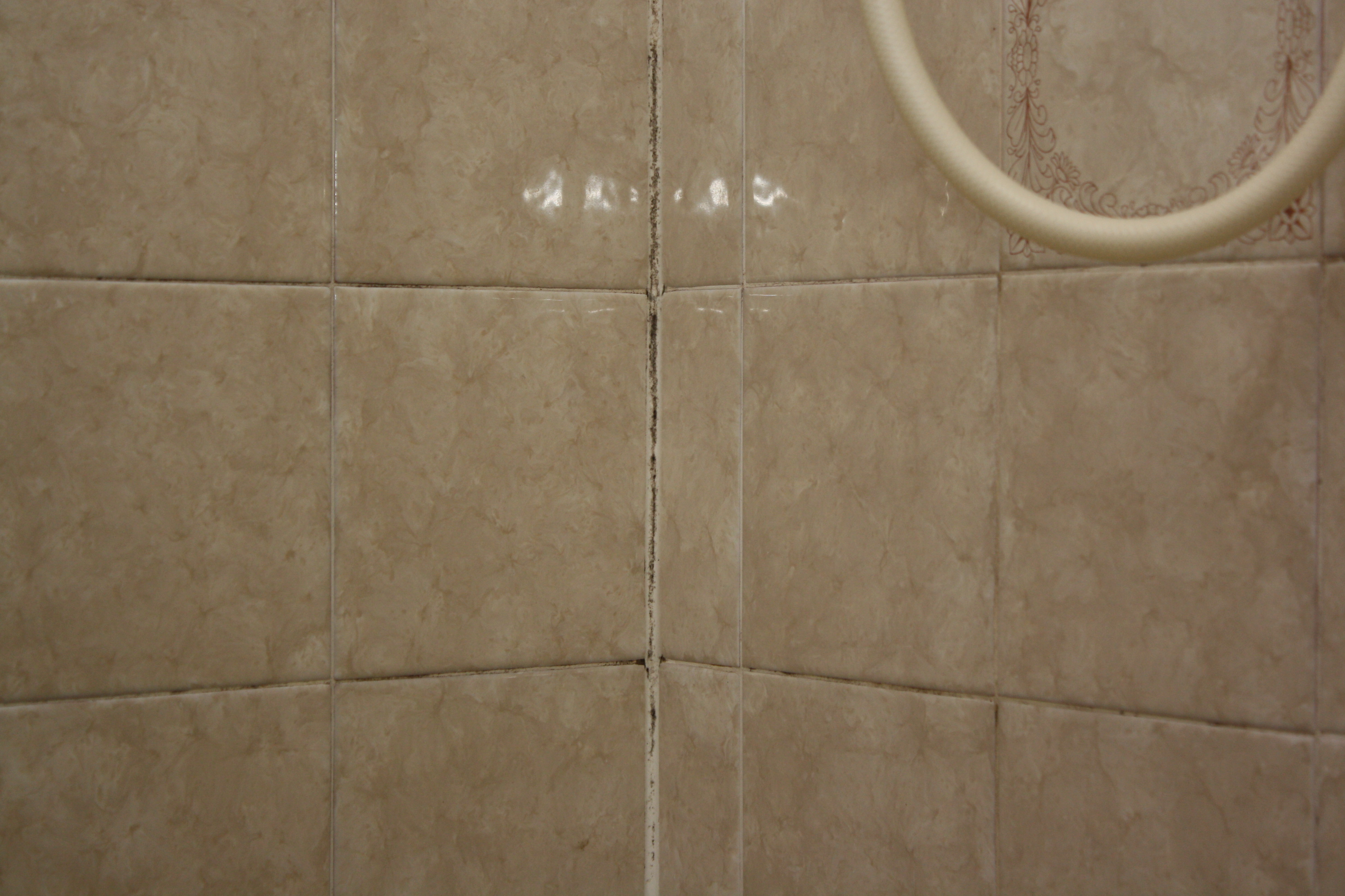 Mold count - Bathroom wall mold removal ...